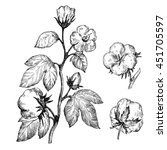 hand drawn cotton plant in... | Shutterstock . vector #451705597