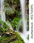 fire salamander | Shutterstock . vector #451710391
