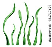 seaweed  green grass  plant ... | Shutterstock . vector #451717624