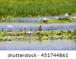 Small photo of African Jacana (Actophilornis africanus) in Mabamba wetland, Uganda
