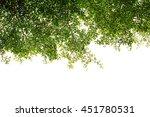 branch green leaf on white... | Shutterstock . vector #451780531