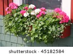 A Wooden Window Box Filled Wit...