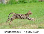Stock photo bengal cat jumping 451827634