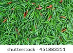 close up of some red and green... | Shutterstock . vector #451883251