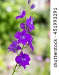 delphinium flowers  consolida... | Shutterstock . vector #451993291