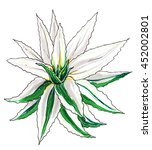 white aloe vera cactus. hand...   Shutterstock . vector #452002801