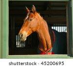 Profile Of Horse Head In Window