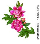 peony flowers isolated on white ... | Shutterstock . vector #452034241
