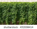 Vine Covered Fence Background....