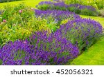 Stock photo beautiful summer garden with lavender and roses 452056321