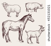 Vector Illustration Set   Hors...