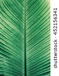 details of big green leaf ... | Shutterstock . vector #452156341