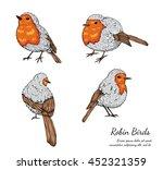 Robin Bird On White Background...