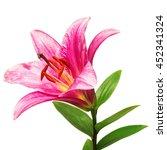 beautiful pink lily flower... | Shutterstock . vector #452341324