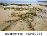 Pile Of Gathered Driftwood Tre...