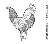 hand drawn cockerel isolated on ... | Shutterstock .eps vector #452482165