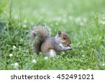 Cute Squirrel Eating In The Park