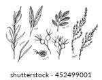 hand drawn vintage illustration ... | Shutterstock .eps vector #452499001