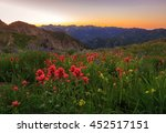 Sunset With Indian Paintbrush...