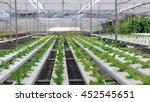 hydroponics method of growing... | Shutterstock . vector #452545651