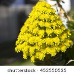 Bright Yellow Large Conical...