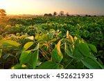 soy field and soy plants in...   Shutterstock . vector #452621935