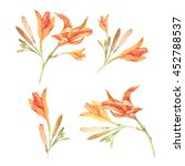 Set Of Watercolor Orange Lily...