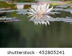 water lilies on the veluwe ... | Shutterstock . vector #452805241