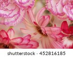 flower on soft pastel color in...   Shutterstock . vector #452816185
