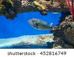 colorful fish swimming in the... | Shutterstock . vector #452816749