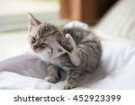 Close Up Of Cute Tabby Kitten...