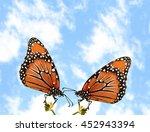 Two Monarch Butterflies Outside
