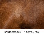 Dog Fur. Animal Fur Texture....