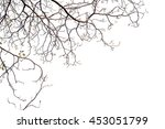 tree branches on a white... | Shutterstock . vector #453051799