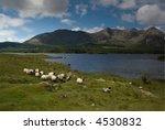 sheep on the run beaneath the... | Shutterstock . vector #4530832