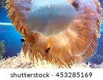 Small photo of Actiniaria in a sea aquarium