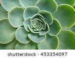 green cactus flower background  ... | Shutterstock . vector #453354097