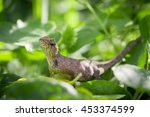 brown native lizard or... | Shutterstock . vector #453374599