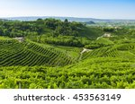 prosecco vineyards at summer ...