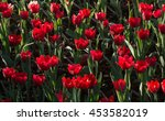 group of tulip flowers are... | Shutterstock . vector #453582019