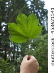 a man holding a leaf against... | Shutterstock . vector #453621541