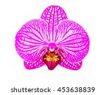 Purple Orchid Isolated Over...