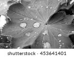 leaf with waterdrops   saxony ... | Shutterstock . vector #453641401