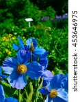 Small photo of Flowers in the botanical gardens of Akureyri, Iceland