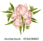 beautiful bouquet of pink... | Shutterstock .eps vector #453658885