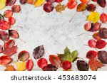 Colorful Autumn Leaves On A...