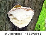 Mushroom In The Forest.  ...