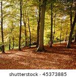 Autumn In An English Arboretum...