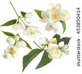 white flowers of jasmine on the ... | Shutterstock . vector #453850414