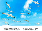 A Group Of Flying Seagull Bird...
